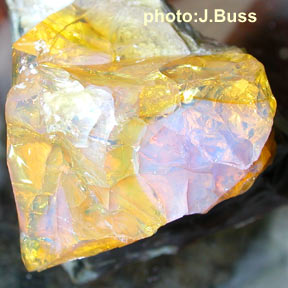Jelly Opal 614 photo:J.Buss